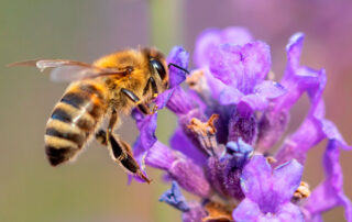 miel de espliego de La Alcarria