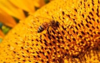usos del polen - El Colmenar de Valderromero